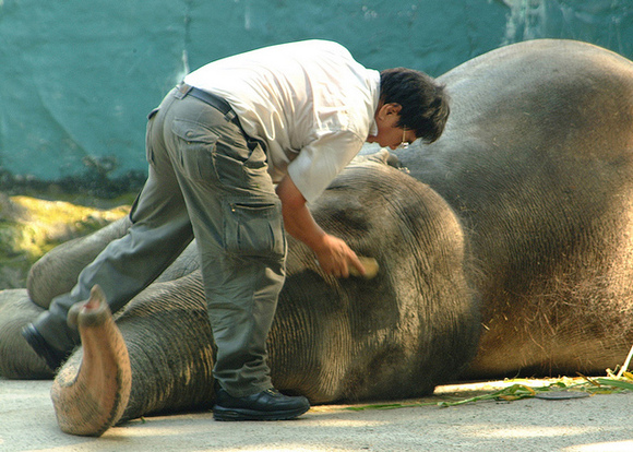 manila zoo background essay Notes & essays mali the elephant may not be as lonely as you think an animal welfare advocate writes against sending the 'lonely' elephant to thailand by isa.