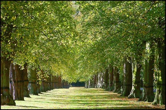 ccattrib_sharealike_trees_2006_lincolnian