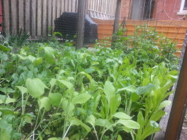 Various leafy greens, with tomatoes and peas in the background